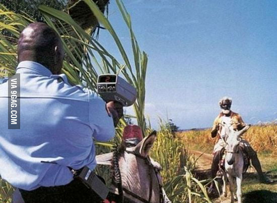 High speed level : donkey