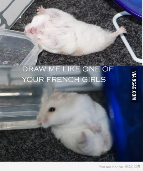 Draw me like one of your french hamsters