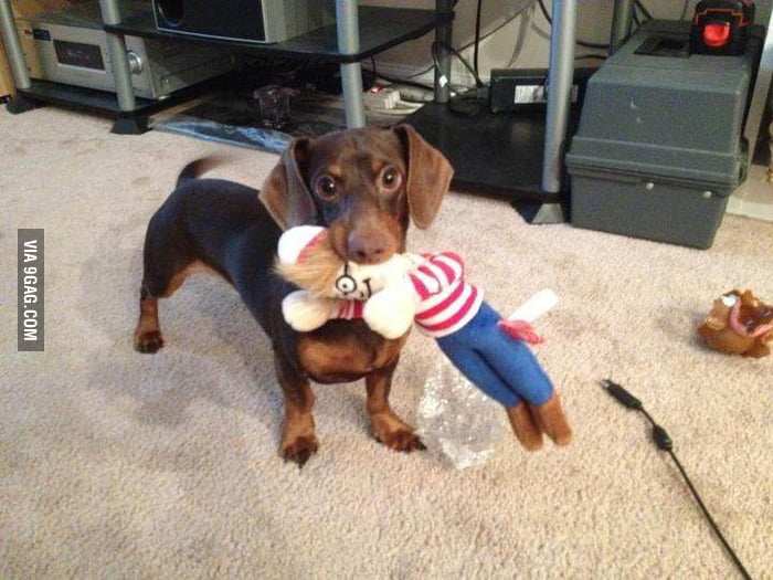 Master, I just found Waldo!