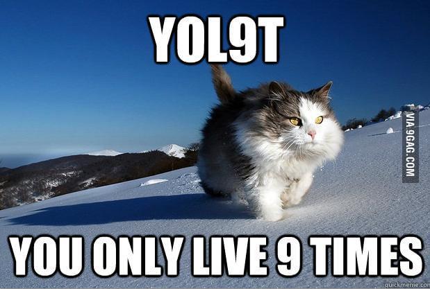 Adventure cat....