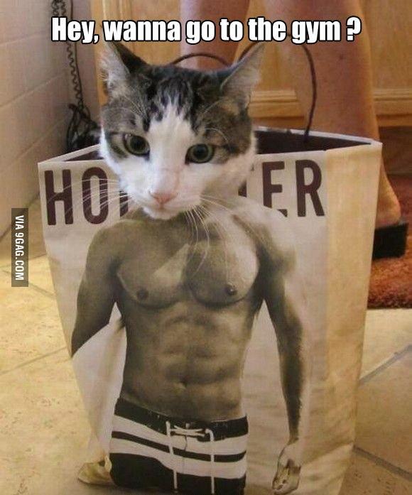 Hey human, wanna go to the gym ?