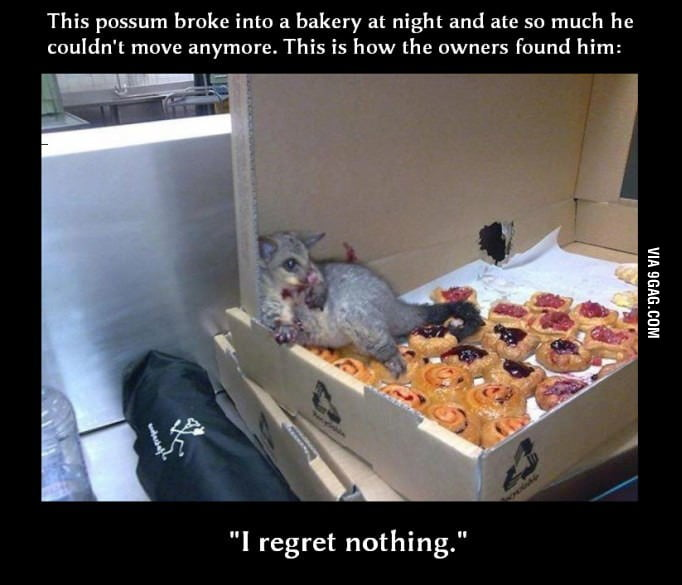 Possum dominates himself at a bakery