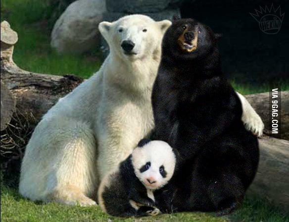 How to make panda