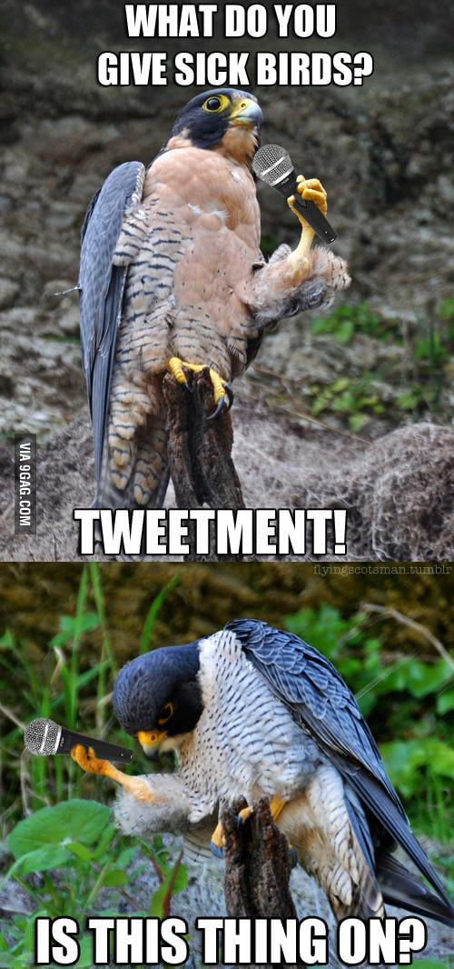 I present: Stand-up falcon.