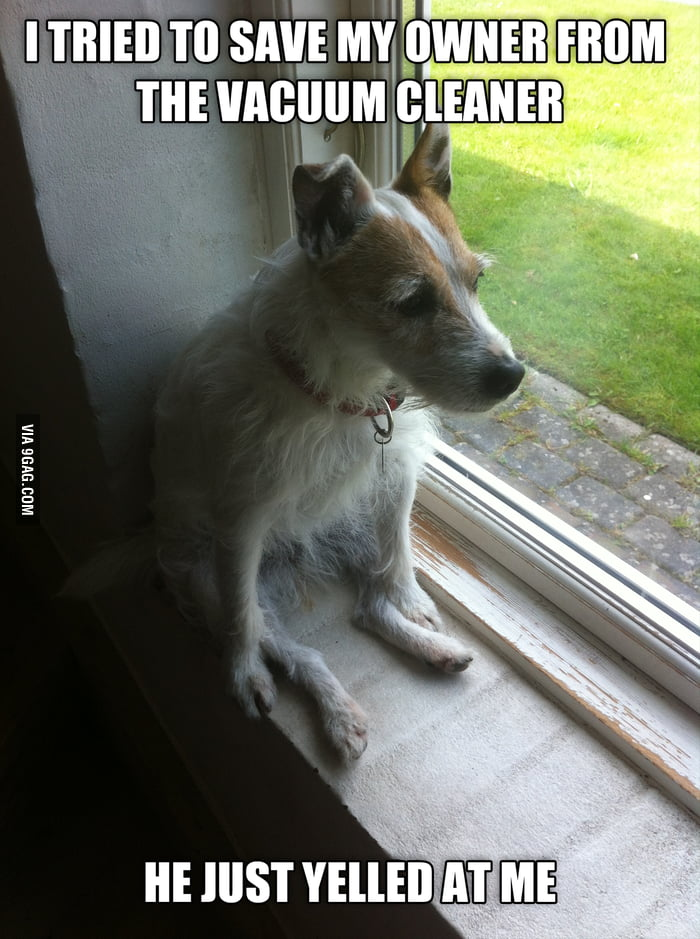 First World Dog Problems