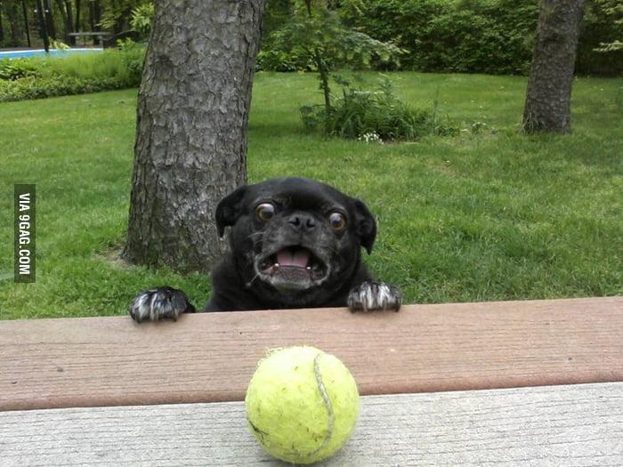 Derpdog Vs Tennis Ball