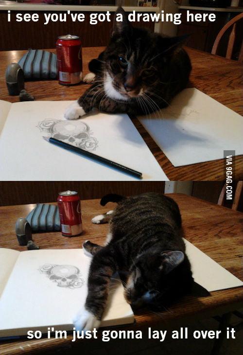 Rude cat is rude