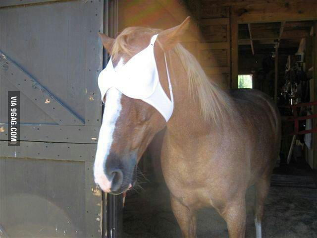 So my friend needed to blindfold her horse...