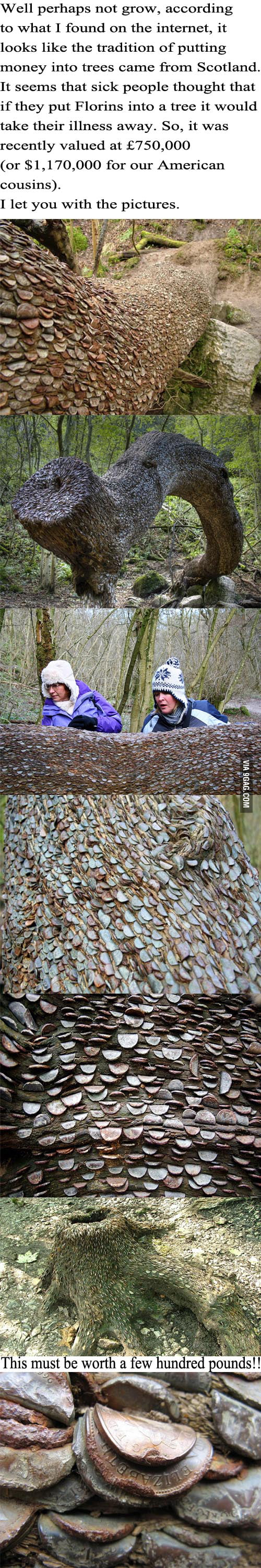 Money grows on trees!! A tree worth $1.17 million