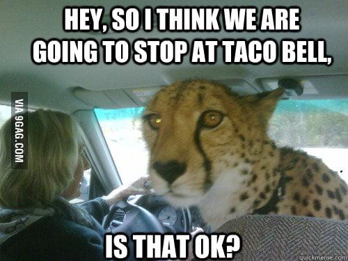 Cheetah wants to stop at Taco Bell