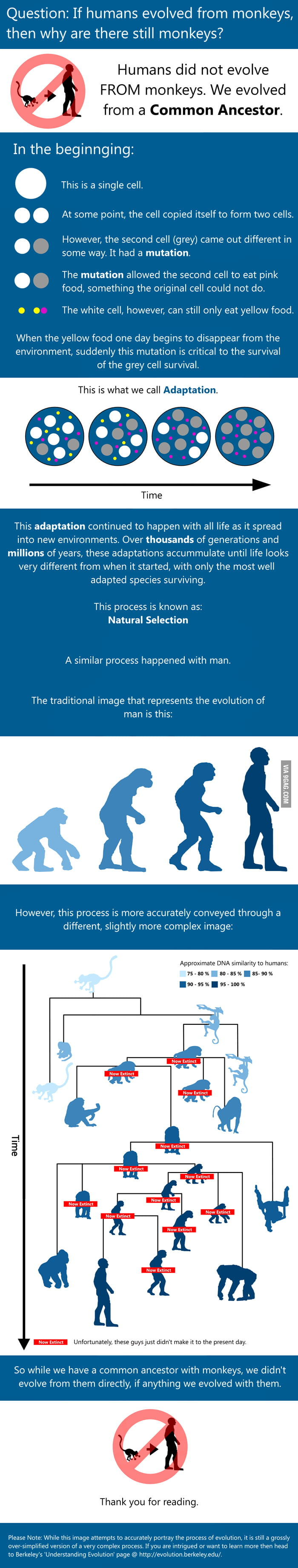 If We Humans Evolved From Apes Why Are Apes Still Here?