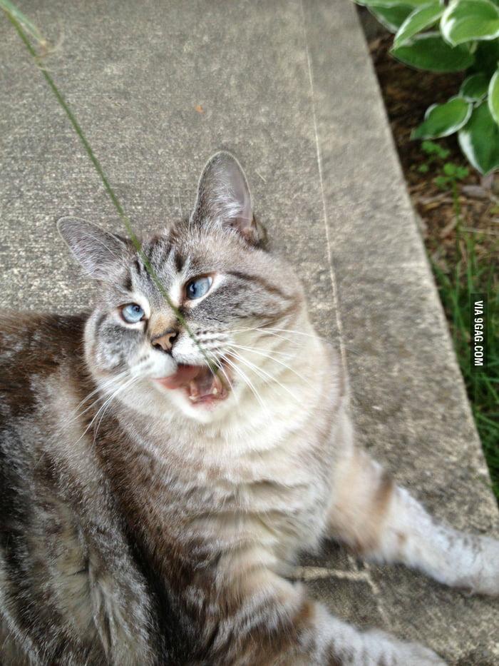 Derp Cat