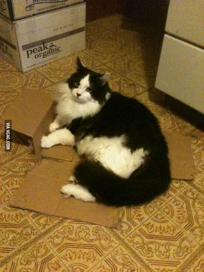 If I don't fit, I break.