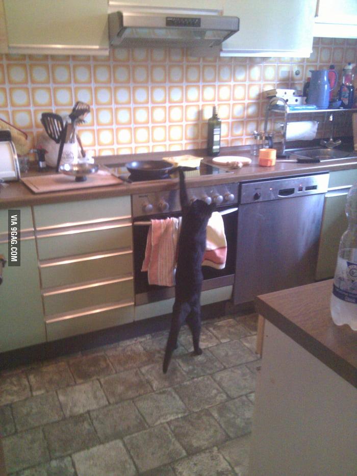 Long cat is long