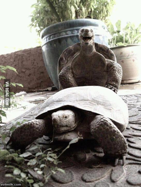 Turtle has funny time