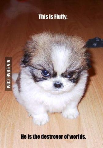 Fluffy The Evil Dog 9gag