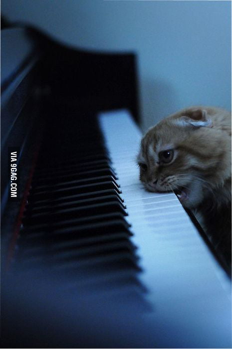 How I feel trying to learn an instrument.