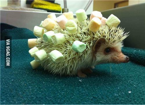 Hedgehog's new haircut