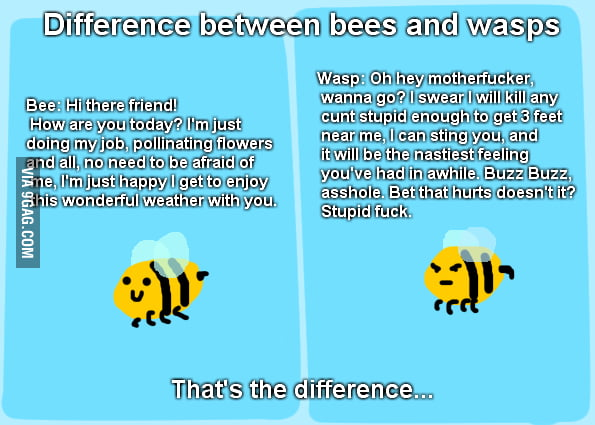What's the difference between bees and wasps?