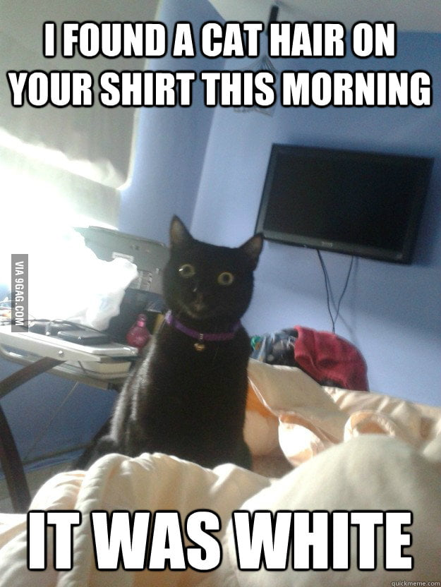Overly attached cat has an eye for details.