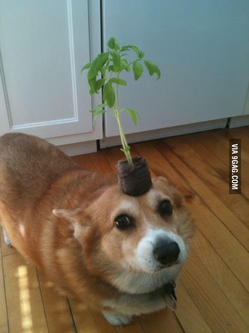 Look Mom, I'm saving the Earth