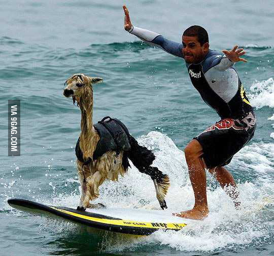 Peru, where Alpacas surf.