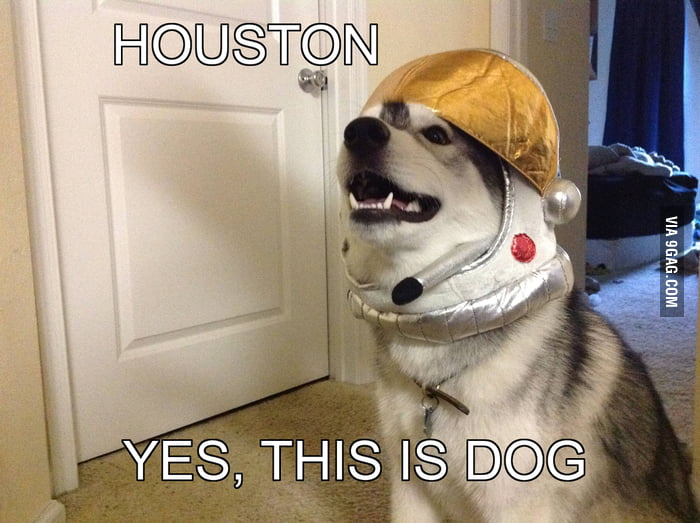 Houston, this is dog