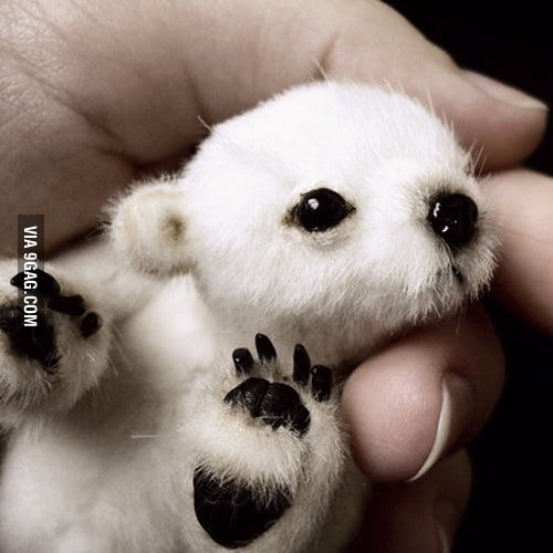 Just a baby polar bear
