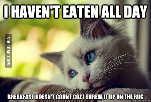 First World Problems Cat
