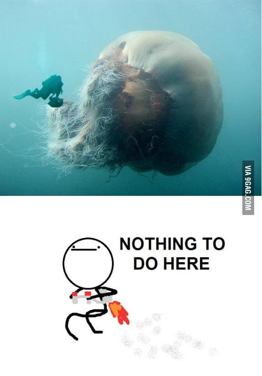 Jellyfishing just got serious