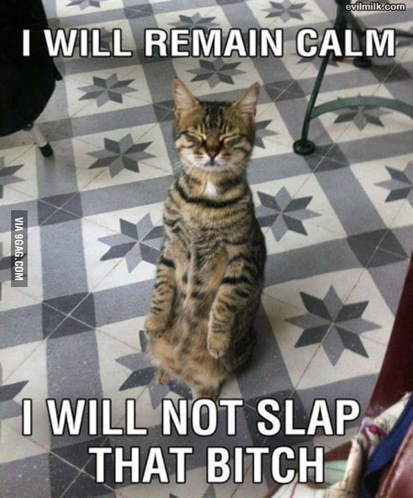 Calm Cat is Calm