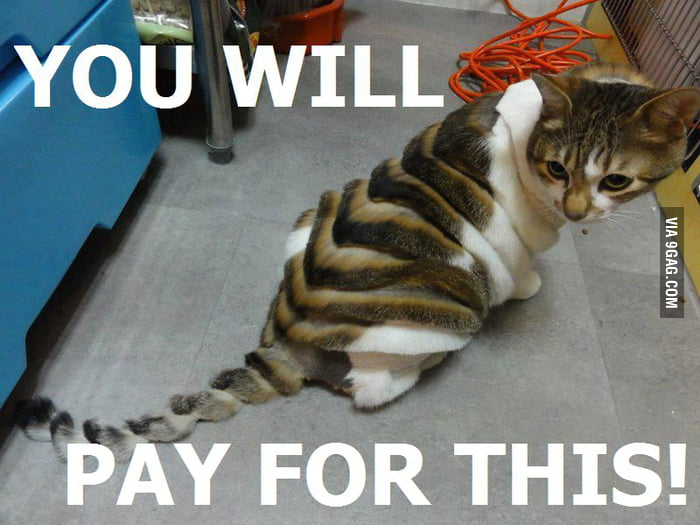 You'll pay...