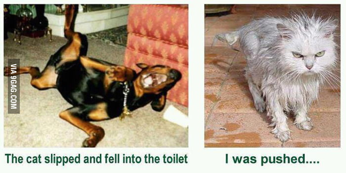 He dropped in the toilet haha!