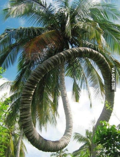 This tree doesn't give a f**k about gravity