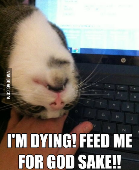 Feed me for God sake!