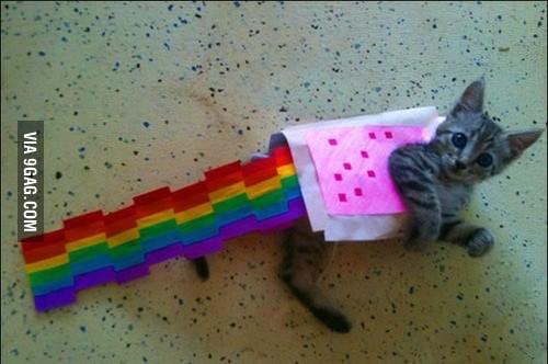 Real Life Nyan