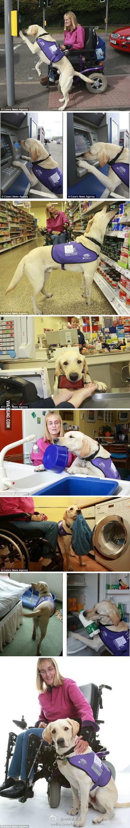 Ultimate dog!
