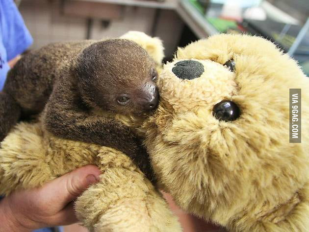 Just a rejected sloth baby using a teddy bear as a new mom