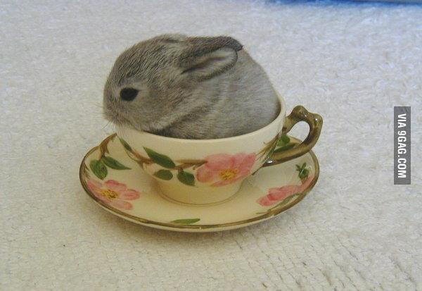 If it fits I sit