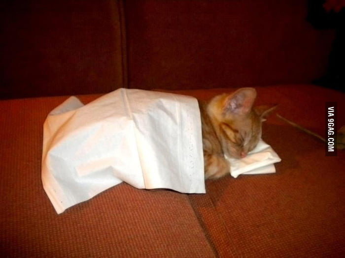 Kitty + Tissues = Cuteness over 9000