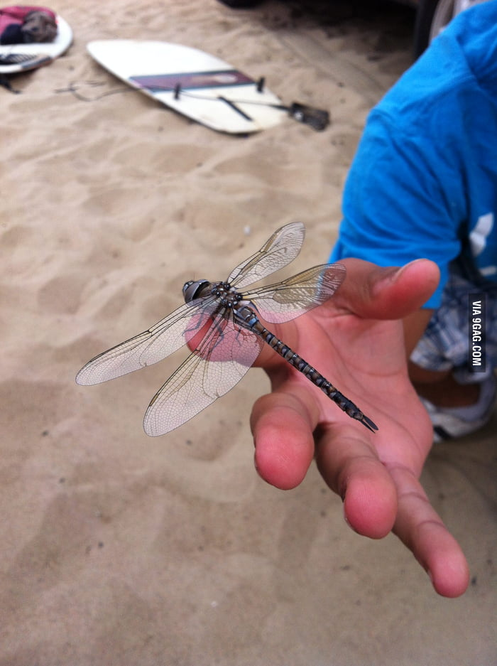 I'm holding a dragon fly. Your argument is invalid.