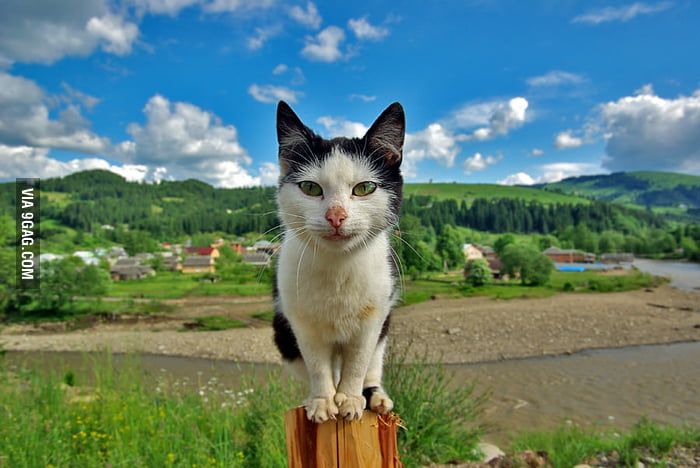 Shaolin Cat