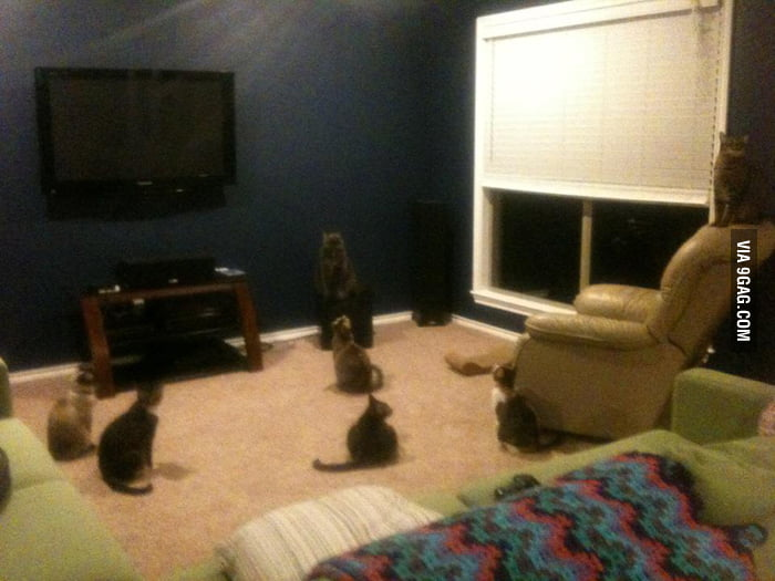 My cats were having a meeting before I got home...