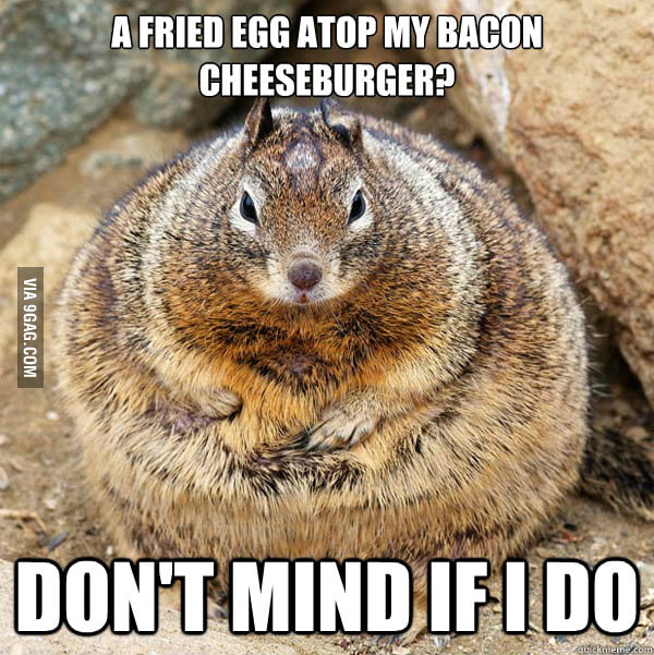 Obese American Squirrel