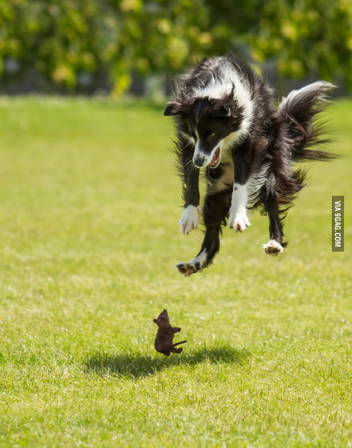 When dog meets mouse