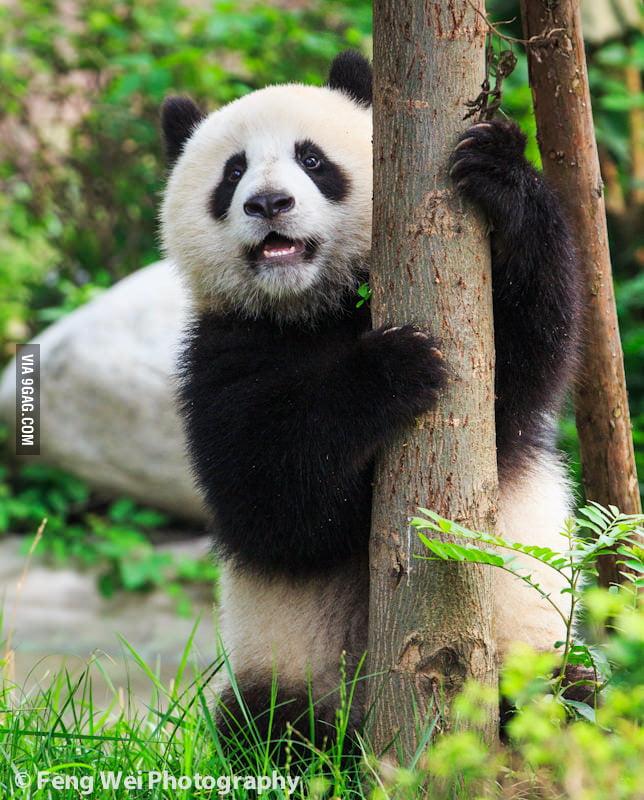 Tree Hugger Panda