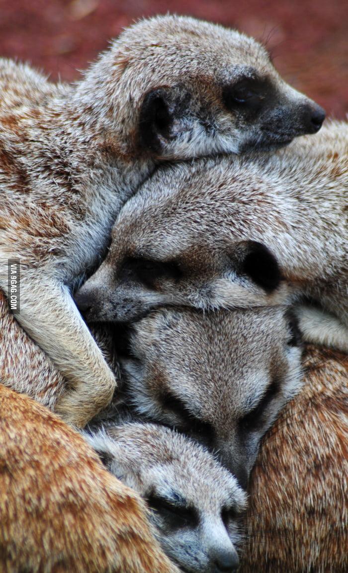 Meerkat Pile