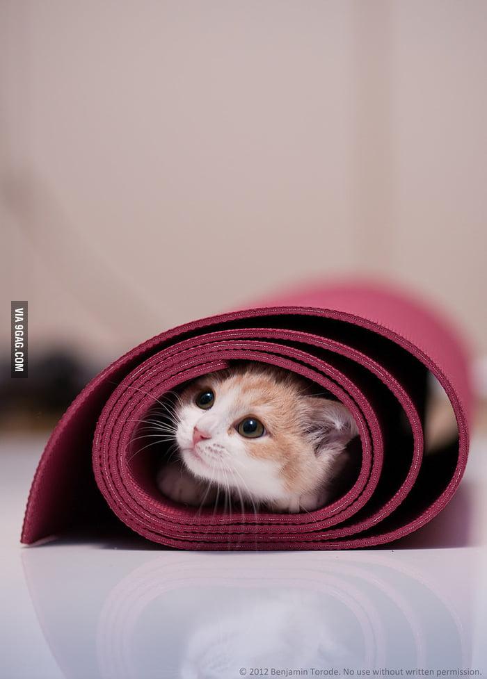 My cat loves my yoga mat...