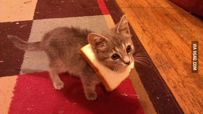 Babycat with a bread necklace