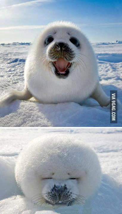 Cute Ice Ball